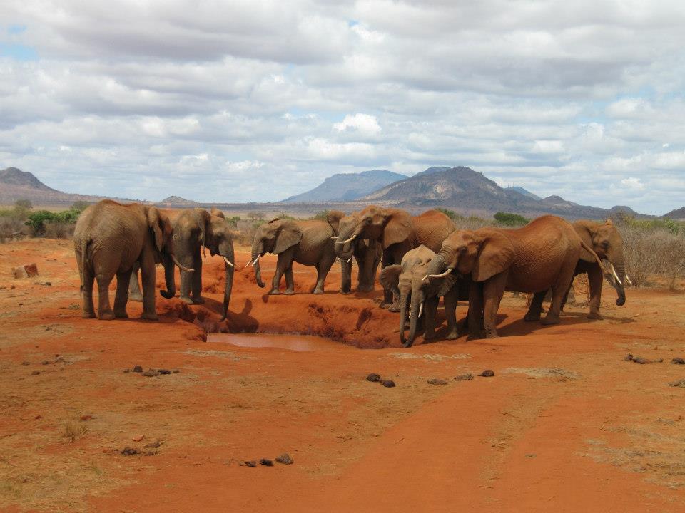 Friedliche Elefanten