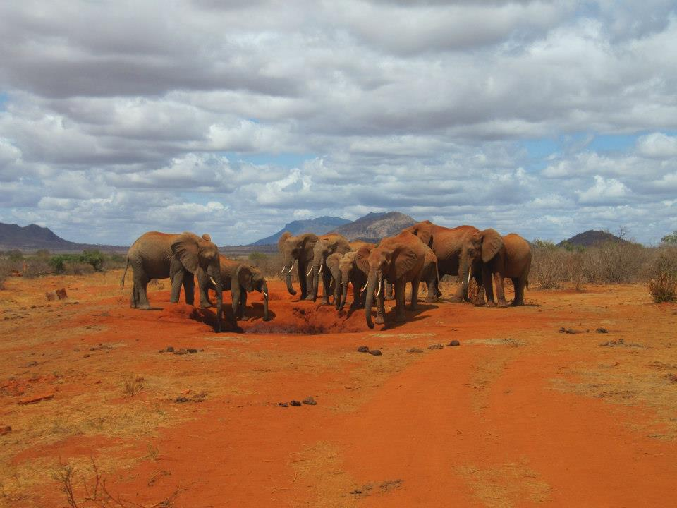 Signal der Elefanten